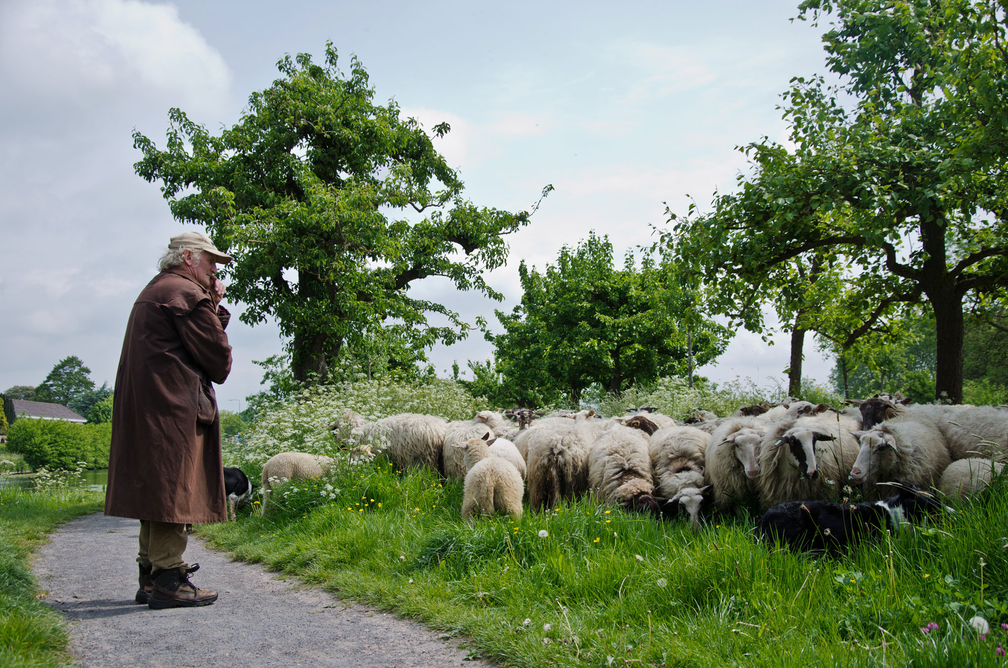 Waards Lam Kraan Vlees herder